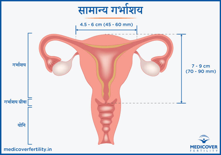 Normal Uterus Size in Hindi